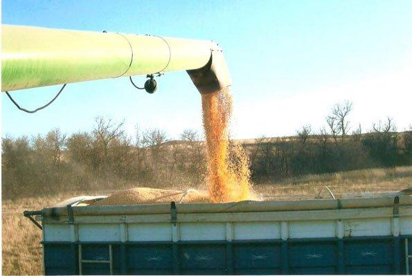Dry Land Corn 2