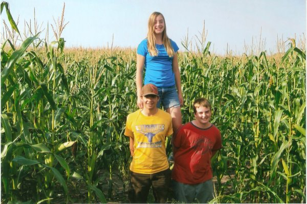 8-10' tall dryland corn summer 2013