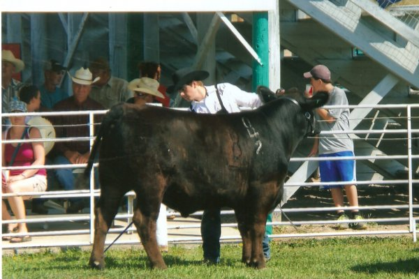 Bob showing his 2013 Grand Champion Steer