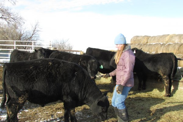 Hope curry combing a playful bull