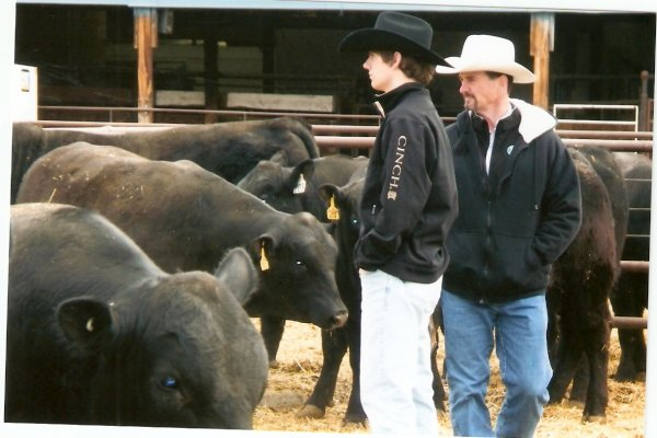 Steve & Bob look at bulls at Midland Bull Test 2013