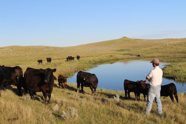 Inspecting the state of the herd