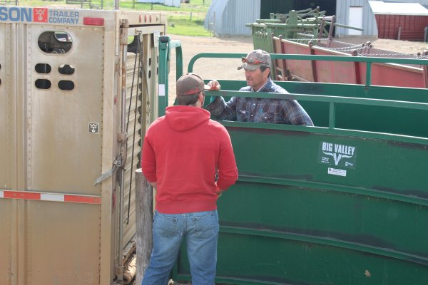 Angus gets instructions from Steve on which pasture to take the cow/calf pairs to